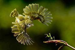 просто птицы